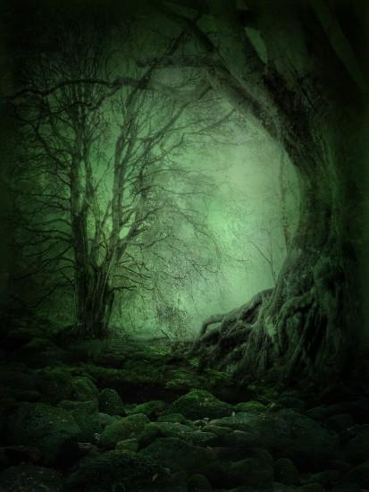 cool dark forest background 1800x2400