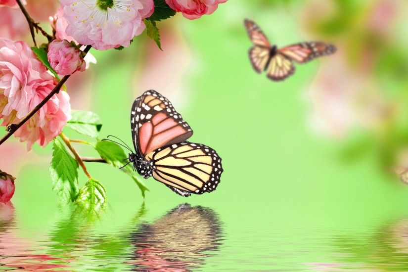 Pink Butterfly Backgrounds - Wallpaper Cave