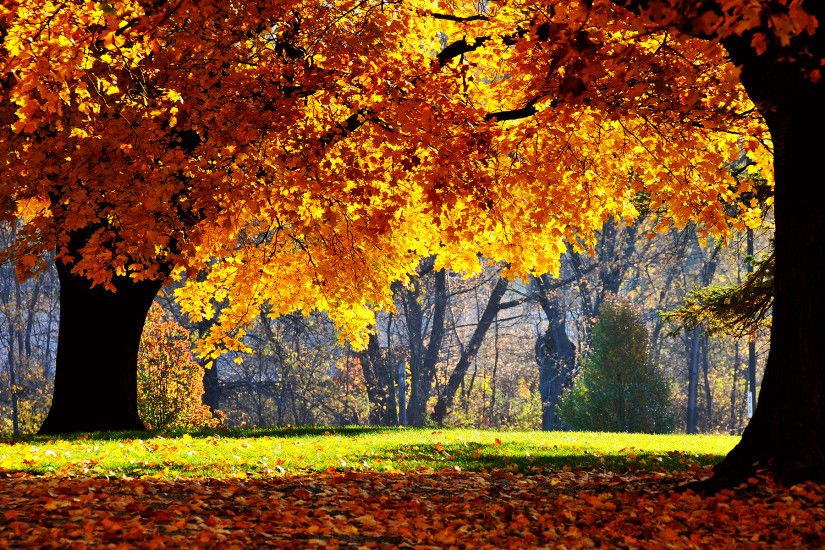 Country Wallpaper - QyGjxZ Fall Wallpaper for Desktop 1920x1080 -  WallpaperSafari ...