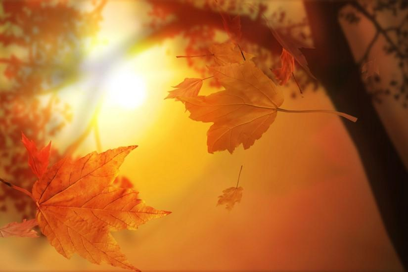 Autumn Leaves with Sunlight backgrounds