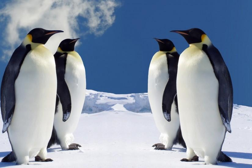 Download Free HD Penguin Wallpaper for Windows