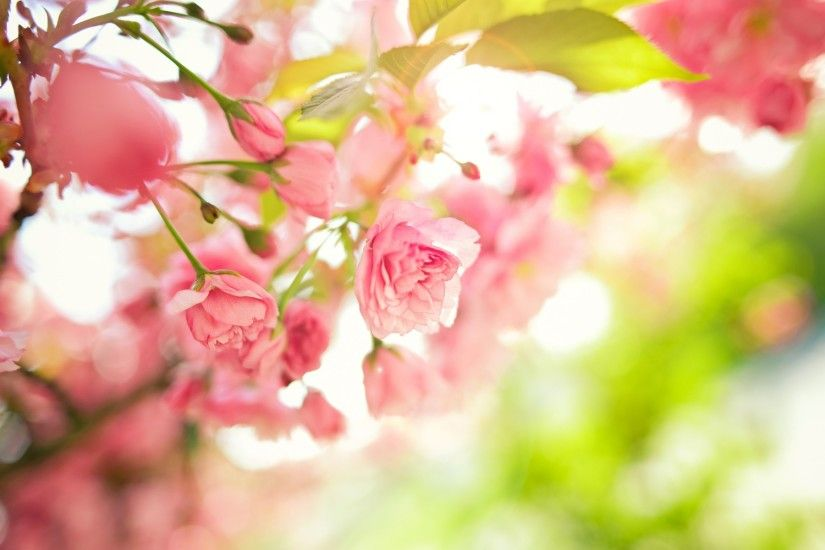 HD Spring Wallpapers For Desktop - Wallpaper Cave