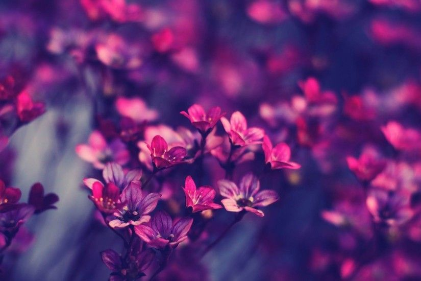 "Search Results for ""wallpaper flowers full hd"" – Adorable Wallpapers"