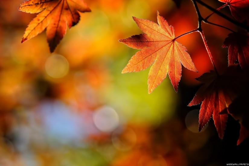 Wallpapers For Fall Leaves Desktop Background Hd