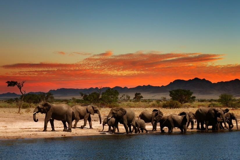 download free elephant wallpaper 2560x1600 samsung