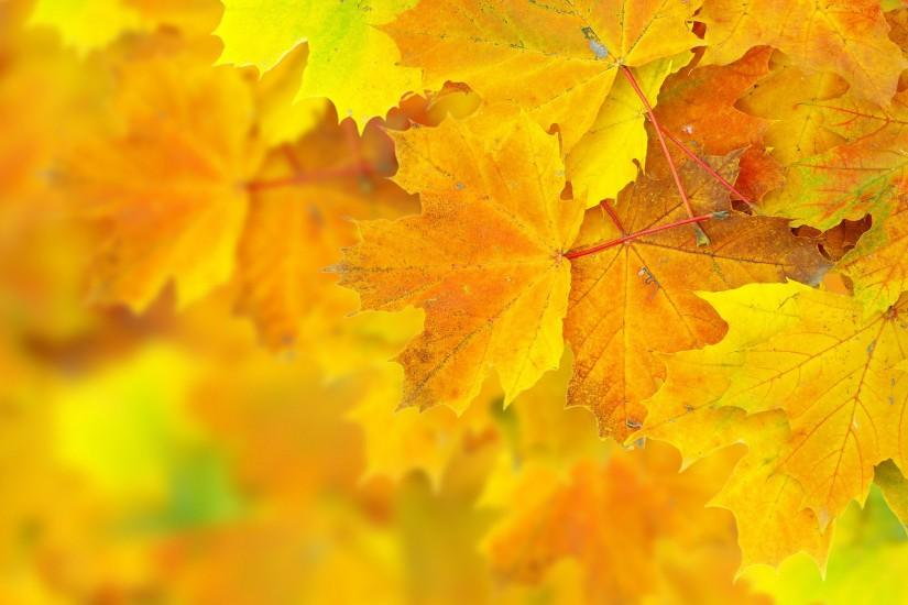 autumn leaves background 8420