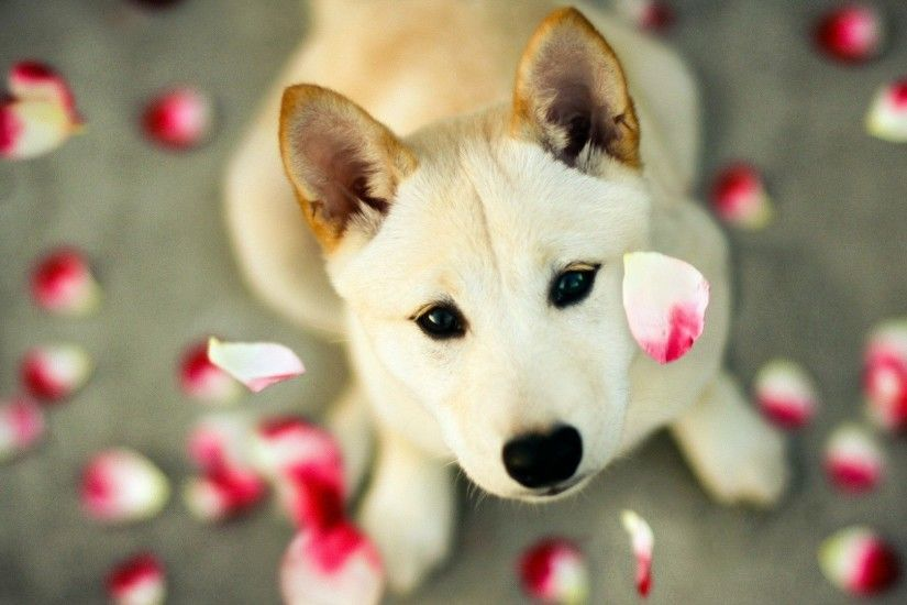 Animal Wallpaper: Cute Dog Wallpapers Images with High Resolution.