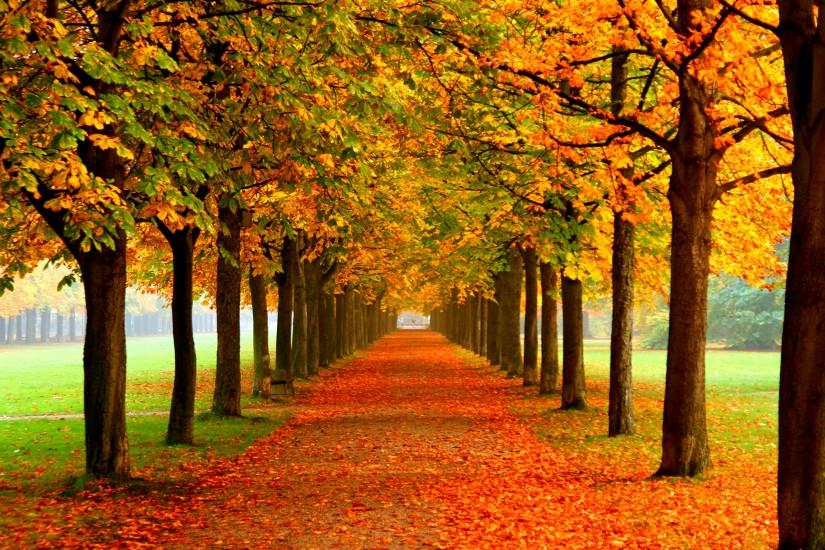 Autumn Free Wallpaper - Autumn Colors Wallpapers - HD Wallpapers 93076