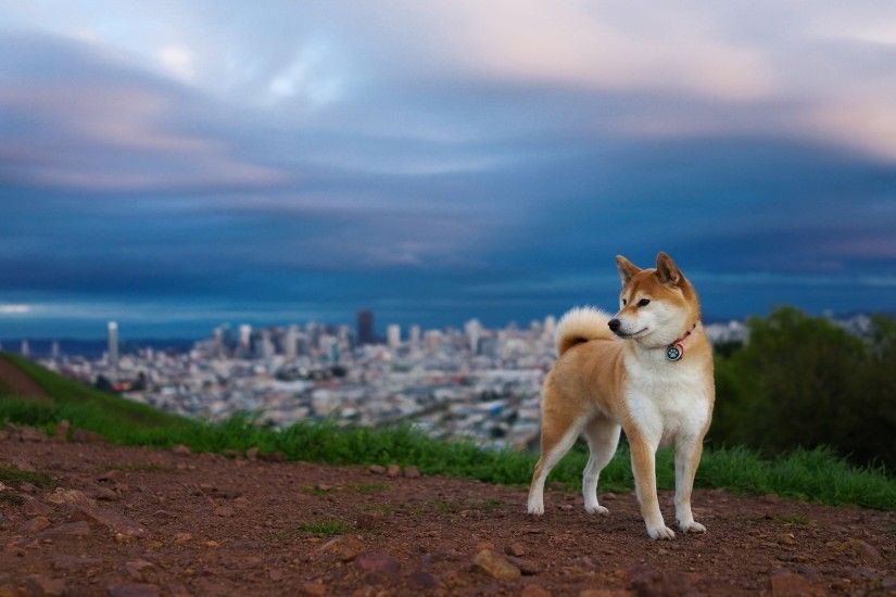 Download Free Siberian Husky Wallpapers PixelsTalk. Siberian Husky wallpaper.  Husky HD Wallpapers Backgrounds Wallpaper Page 1920×1080