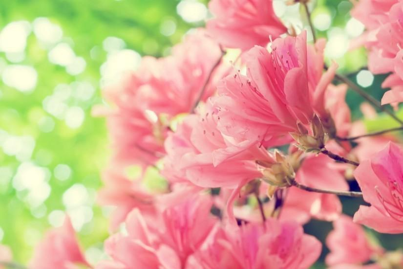 Wallpapers For Pink Hawaiian Flower Background