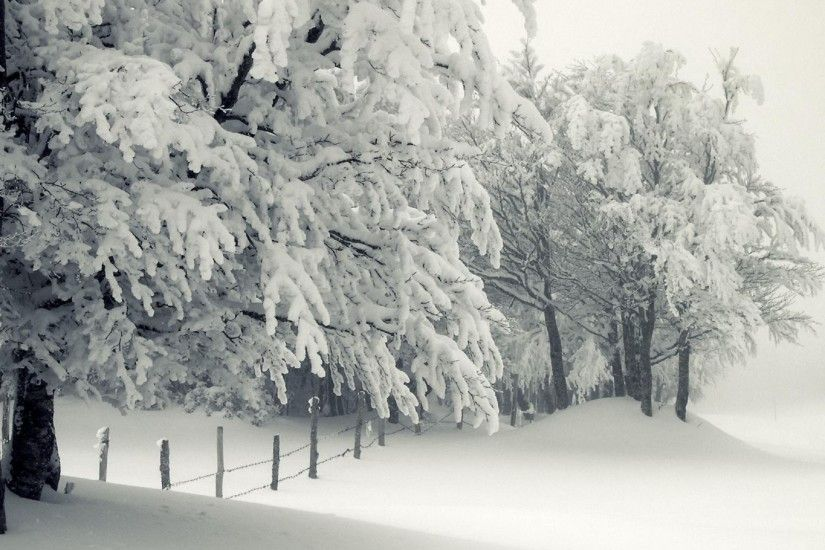 Winter Snow Trees Wallpaper WallDevil 2560×1440