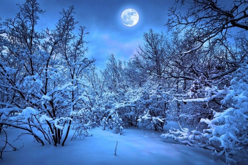 1920x1080 Snowy Night Forest Wallpaper · 7 · Download · Res: 2560x1600 ...