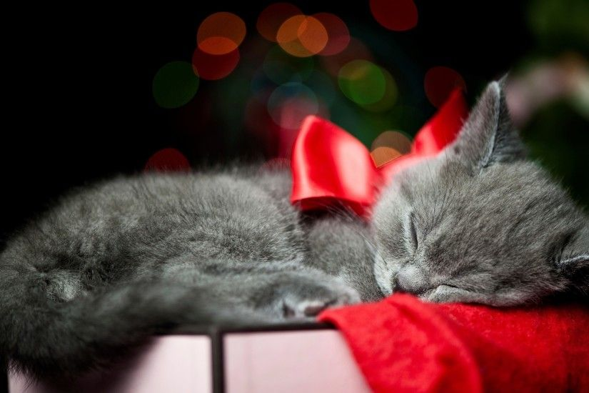 Holidays christmas bow red animals cats kittens whiskers sleep cute  wallpaper | 1920x1200 | 25874 | WallpaperUP