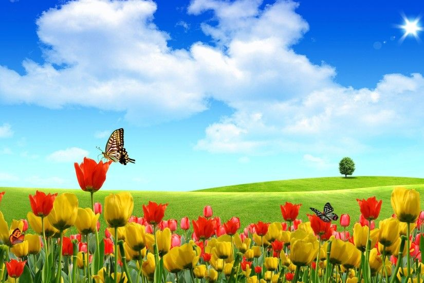 Butterfly Backgrounds butterfly tulip wallpaper backgrounds 1920×1200
