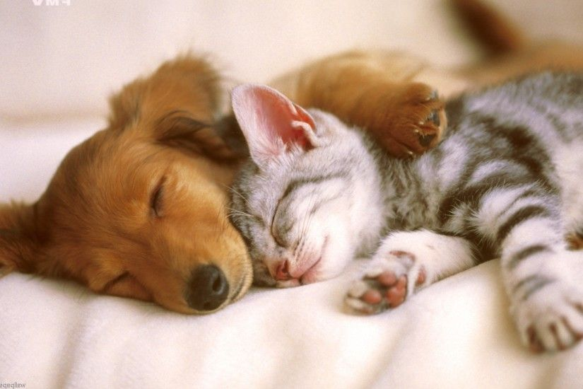 Cute Dog and Cat Wallpaper | PixelsTalk.Net