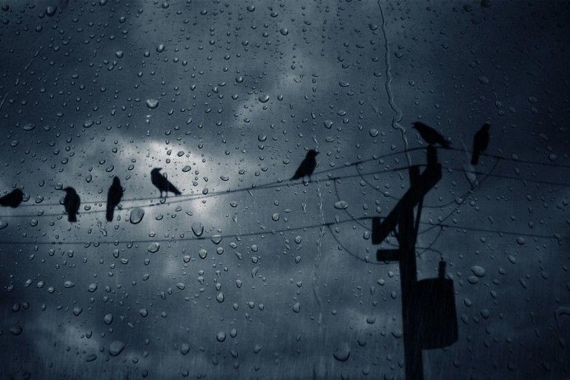 birds-crows-glass-drops-hd-free-animals-wallpaper