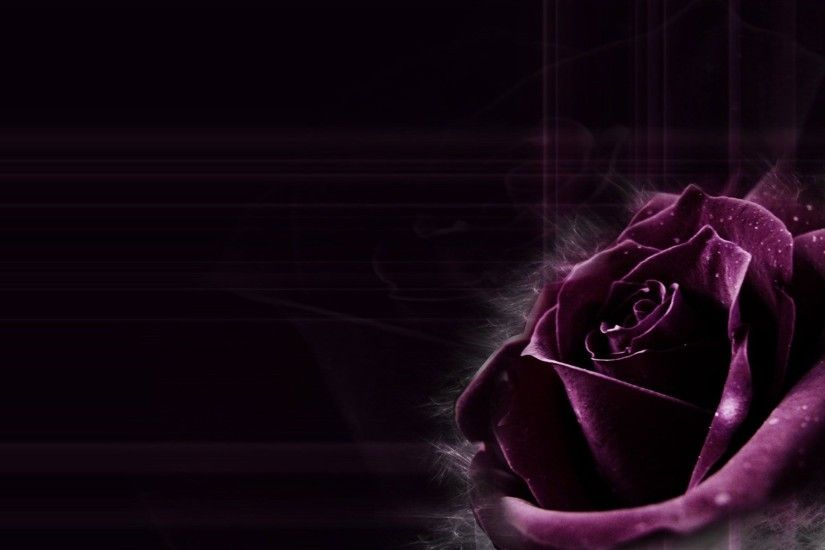 Dark Purple Rose Backgrounds Images & Pictures - Becuo