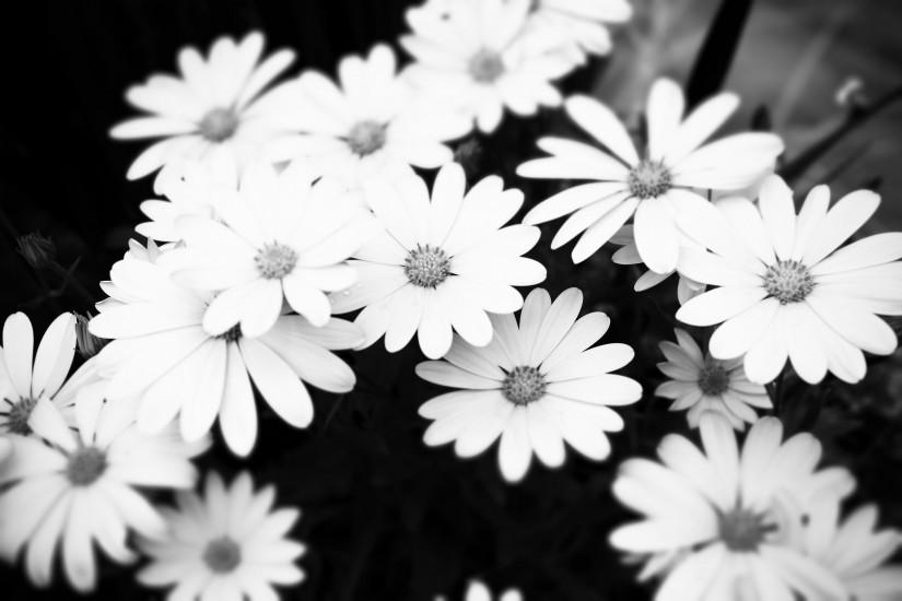 High Res Black and White Floral wallpaper
