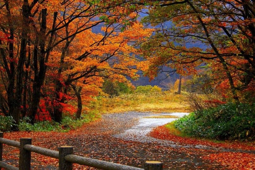 Autumn Trees Desktop Wallpaper | wallpaper, wallpaper hd, background .
