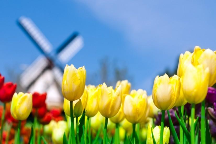 most popular spring backgrounds 1920x1080 download