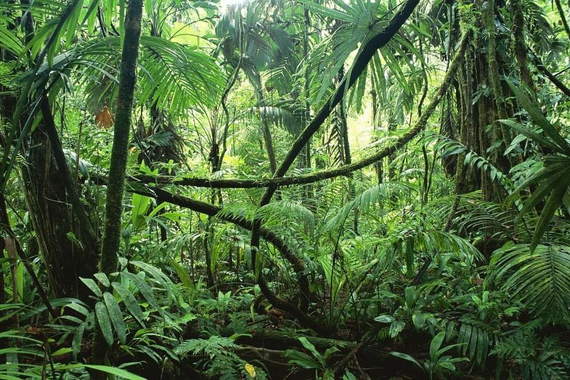 jungle background 1920x1200 windows xp
