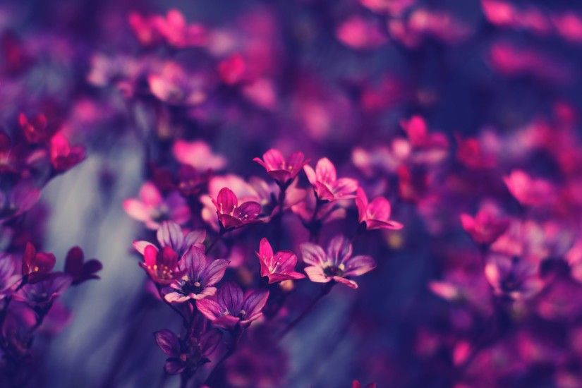 Violet, Purple, Flowers, Full, Hd, Wallpaper, Pictures, Desktop, Background,  Free, Download Wallpapers, Widescreen, Wallpaper Of Iphone, 1920×1200  Wallpaper ...