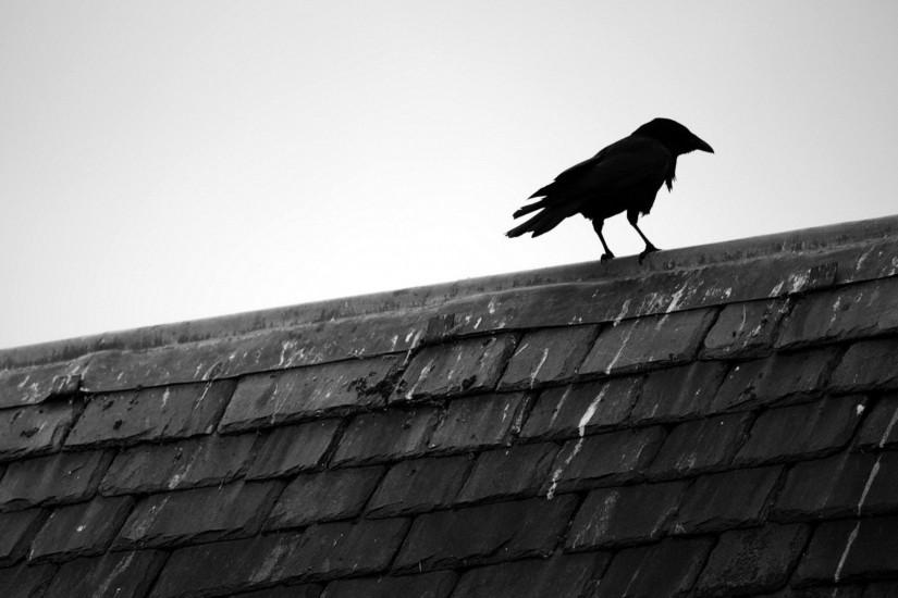 Raven On A Rooftop wallpaper - Animal Backgrounds