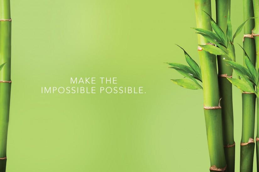 free download bamboo wallpaper 2560x1441