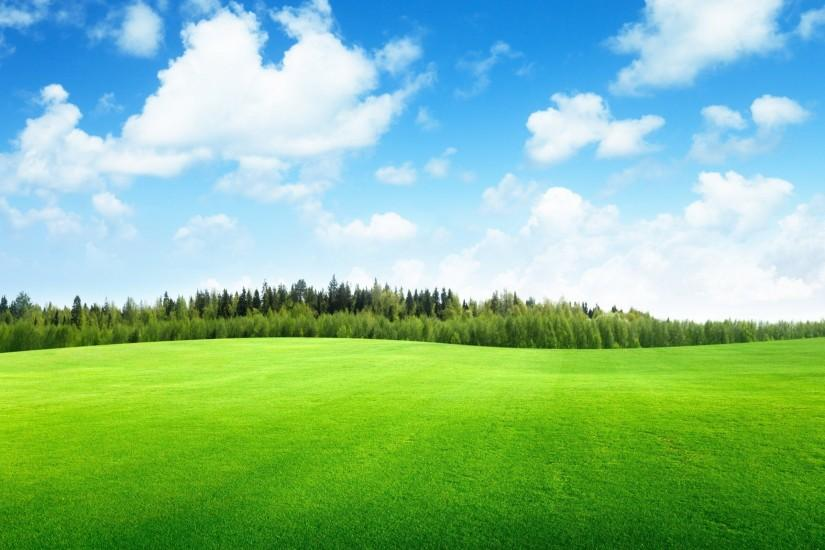 Green grass soccer field background | Stock Photo | Colourbox