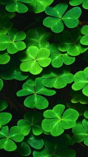 Patch Of Green Clovers ...