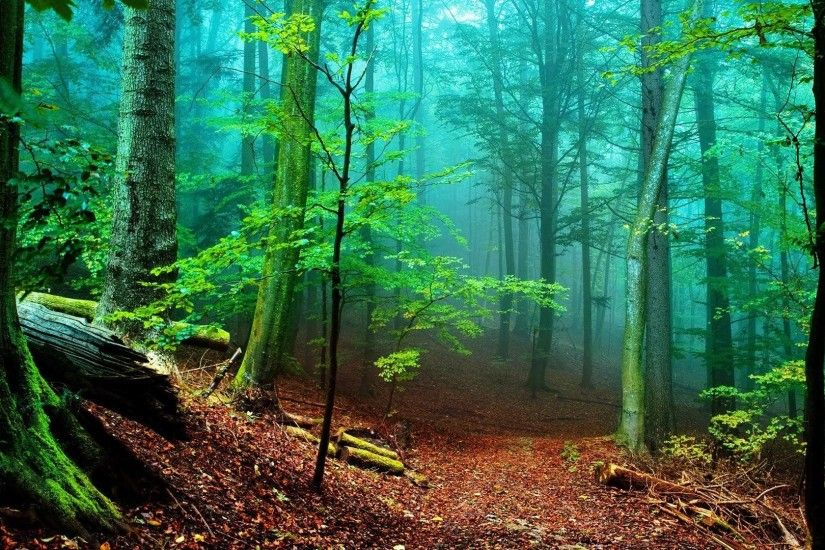 Hd Wallpapers Nature Forest Hd Images 3 HD Wallpapers | Hdimges.