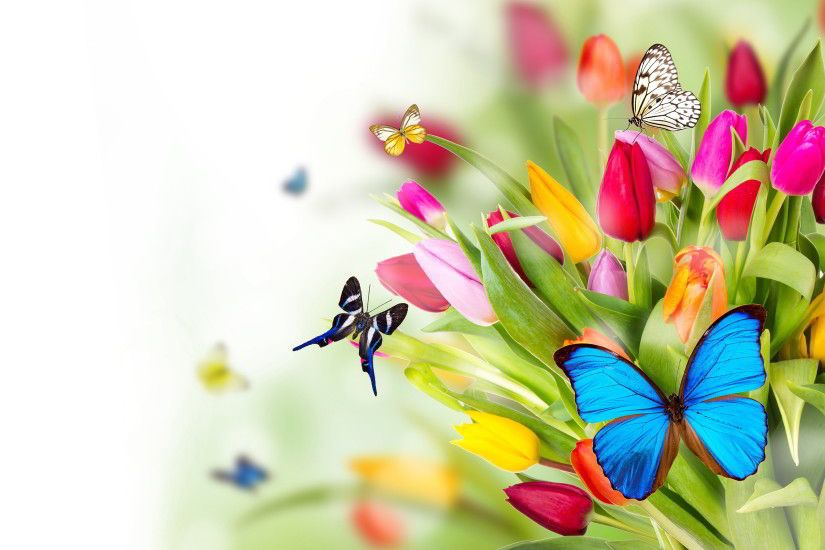 Butterfly Backgrounds | Flowers butterflies Wallpapers Pictures Photos  Images