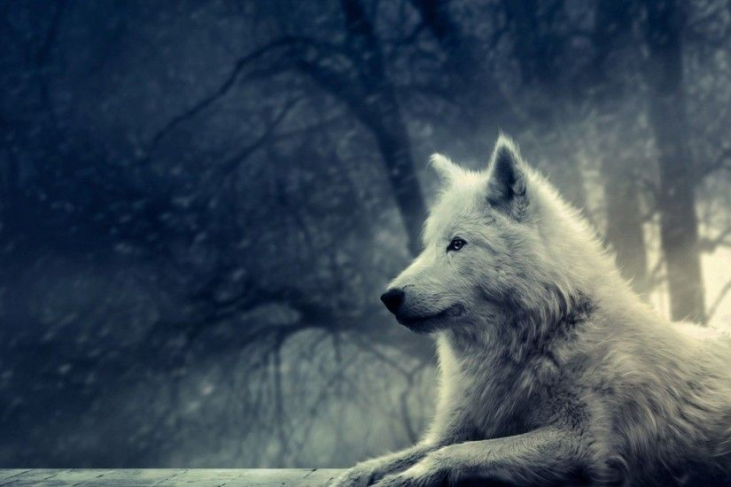 Lone Black Wolf Wallpapers HD Resolution Nythemes 1920×1080