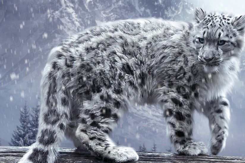 ... Ultra HD 4K Snow leopard Wallpapers HD, Desktop Backgrounds .