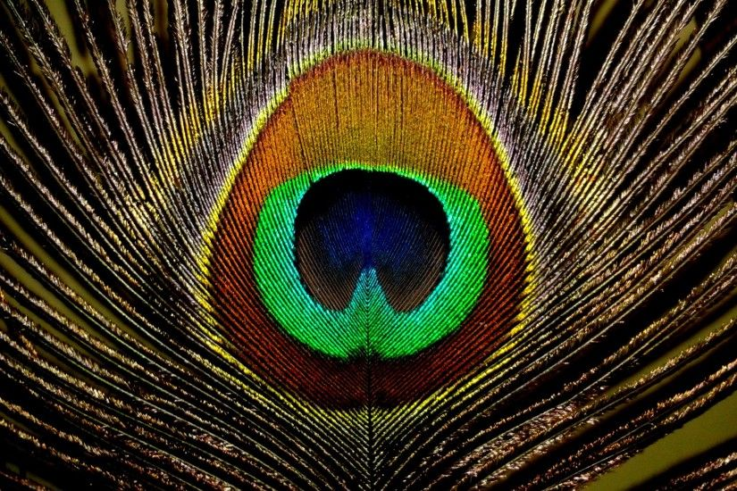 ... HD Wallpaper Peacock Feather wallpaper | 2048x1536 | #71773 ...