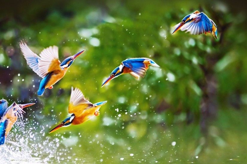 ... 8047 Birds HD Wallpapers | Backgrounds - Wallpaper Abyss ...