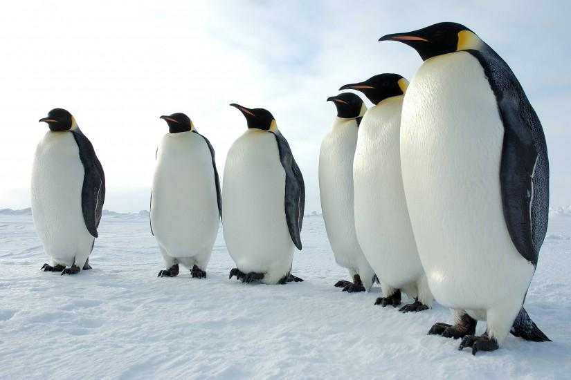 138 Penguin HD Wallpapers | Backgrounds - Wallpaper Abyss ...