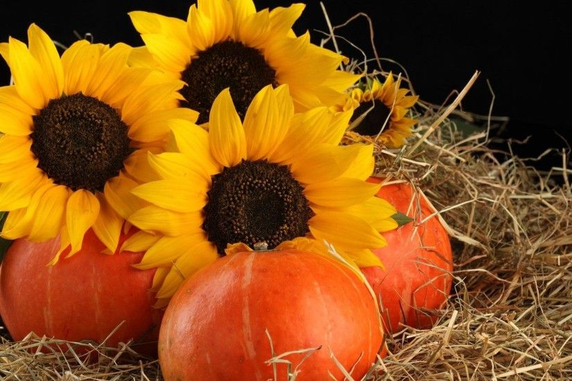 Hay Pumpkins Fall Sunflowers Autumn Decorations Flower Wallpaper Background  Download