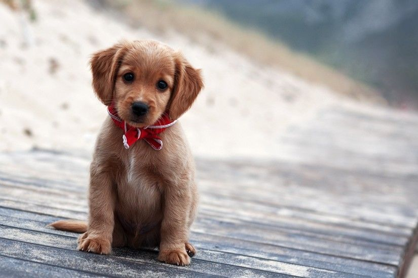 Cute Puppy Wallpapers (40 Wallpapers)