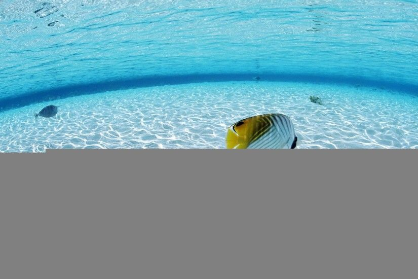 deep-water-gold-fish-beach-hd-wallpaper-desktop-background