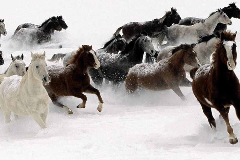 #DDDDDD Color - Snow Herd Horses Animal Humor Photos for HD 16:9 High