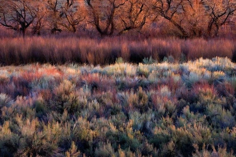 2014-01-10_EN-AU10309991569_Foliage-including-cottonwoods-willows-sage-