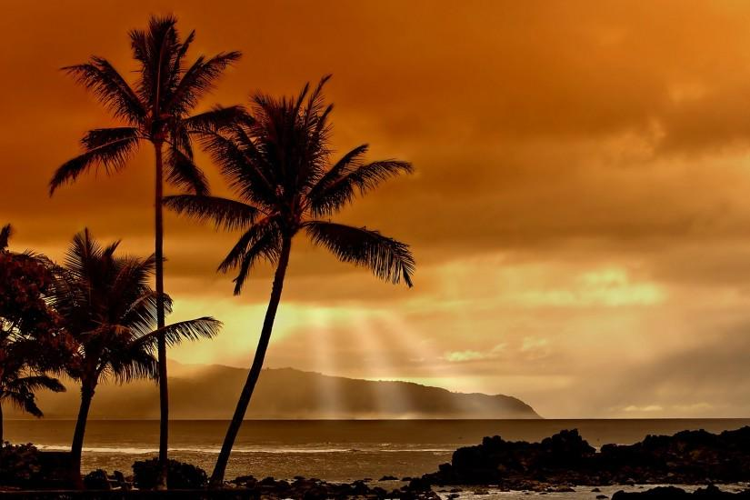 Free Desktop Palm Tree HD Wallpapers.