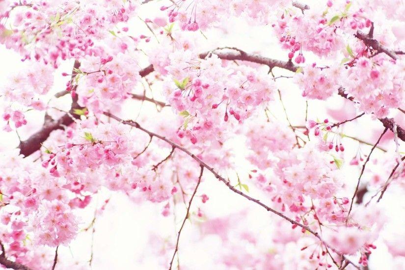 White flower wallpaper pink flowers wallpapers for desktop 1024768 pink flowers wallpaper 50 wallpapers mightylinksfo