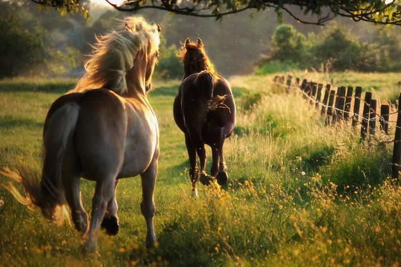 galloping horses background free picture