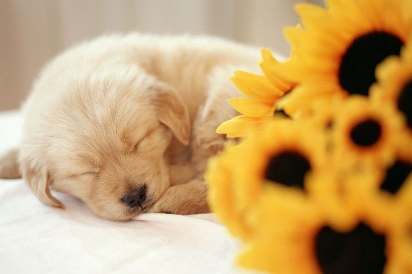 cute puppy wallpapers A10. Â«Â«