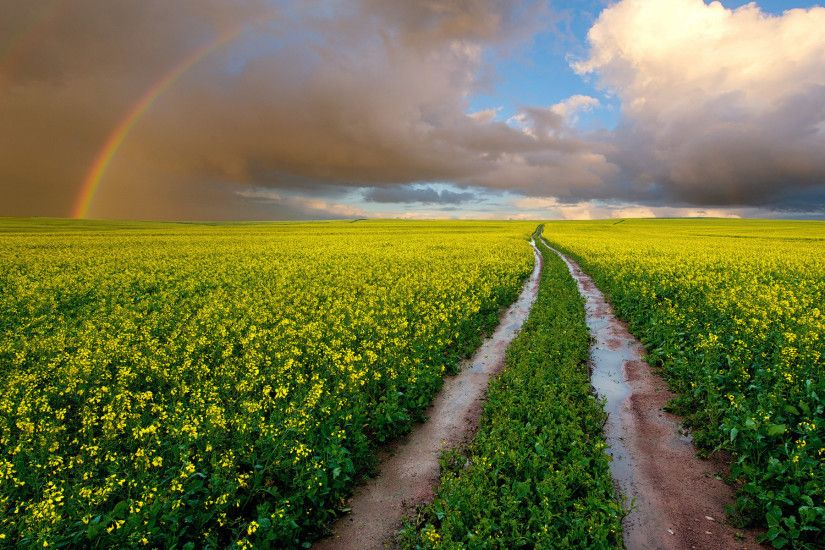 Yellow Fields Path & Rainbow wallpapers and stock photos