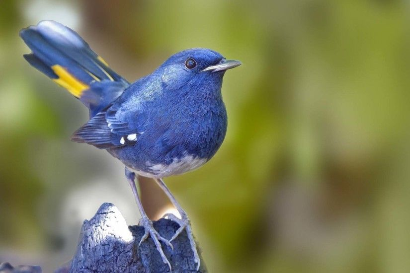 Animal Blue Bird Cute HD Images Wallpaper 1920×1080