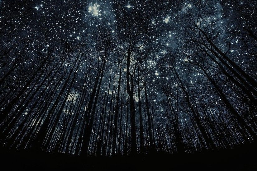 Cosmos Tag - Light Stars Forest Sky Star Cosmos Nature Dark Trees View  Night Outside Wallpaper