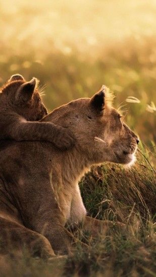 How to download HD Lioness Cub iPhone Wallpaper:-